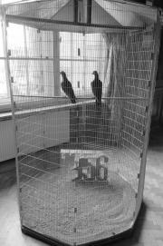 Oko pamięci. Hoheisel&Knitz, Upamiętnienie poznańskiego Czerwca 1956.Fot. M.Smolińska